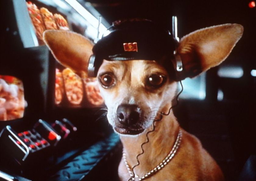 Taco Bell Like Dog Food